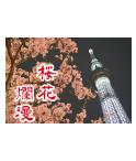 東京都スカイツリー。夜のスカイツリーと桜がとてもきれいでおしゃれなデザインです。